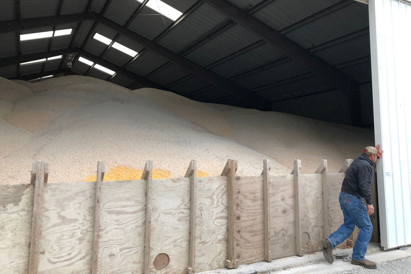 Harvesting in U.S.-China Trade War: Crops Rot as Storage Costs Soar