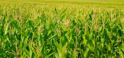 Origin Agritech Reports Non-compliance With Nasdaq Rules