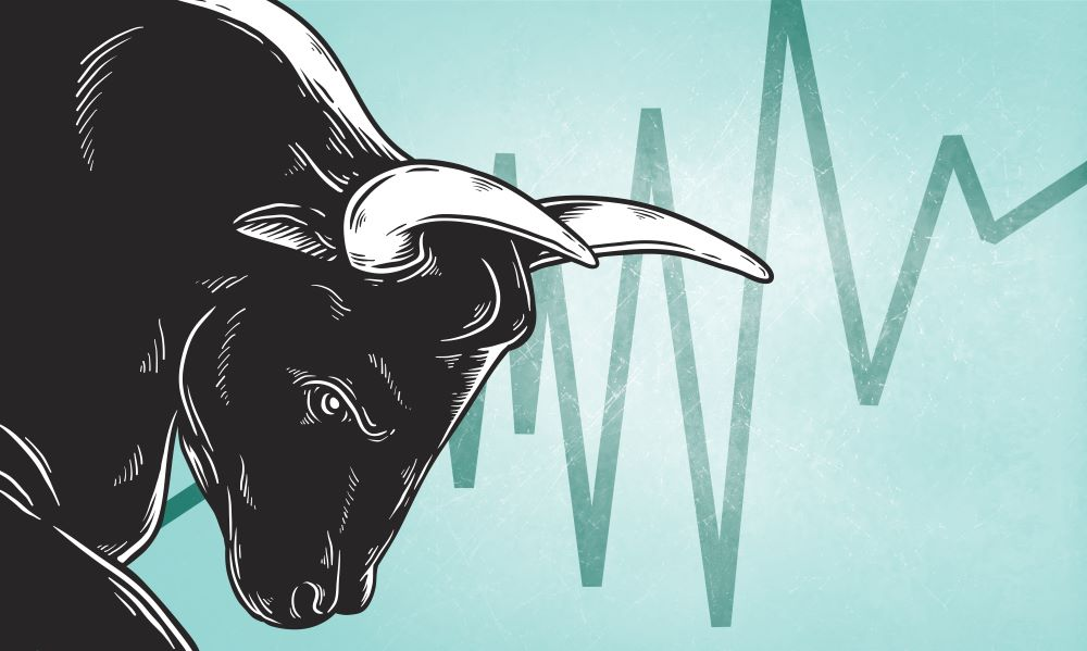 The Anatomy of the Young Stock Market Bull